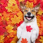 Quiz: How Autumn Are You?