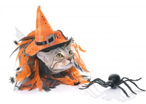 Witchy cat costume