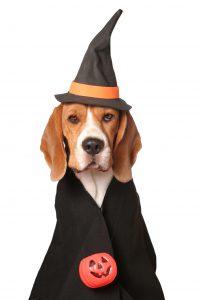 Dog Wizard costume