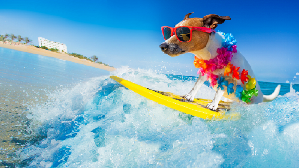 care for your pet in summer